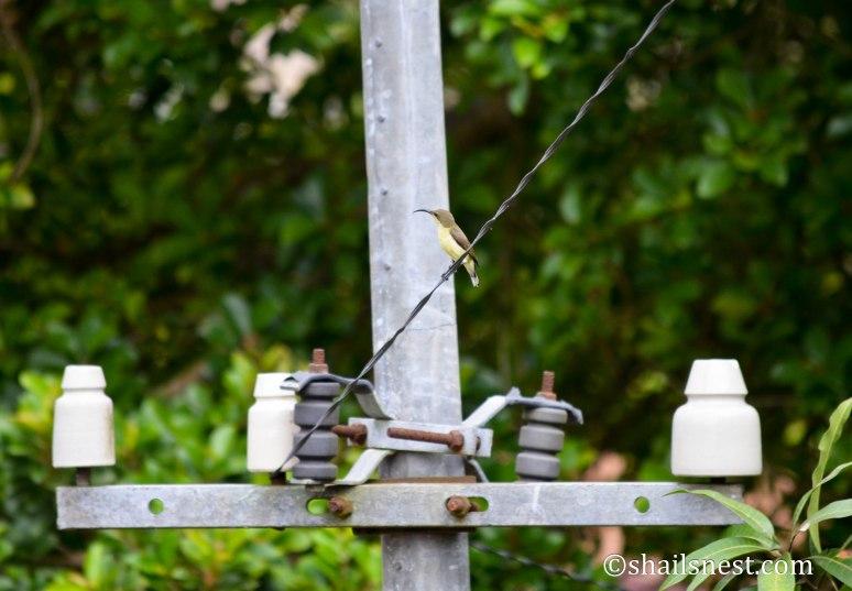 bird-223
